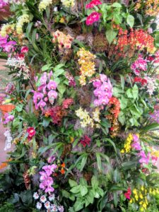 Here is a columnar display highlighting the diversity of orchids. There are about 30-thousand species of orchids in the wild, and more than 100-thousand registered hybrids.