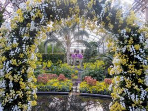 This is a view in the East Conservatory featuring an arch of more than 600 white and yellow Phalaenopsis - all the orchids are simply spectacular.