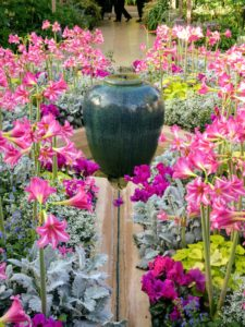 Here is a vibrant display in the Mediterranean Garden - it includes amaryllis, Hippeastrum 'Estella', spurge, Euphorbia 'Inneuphdia' Diamond Frost®, heart-leaf pelargonium, Pelargonium cordifolium 'Caroline's Citrine', ground-ivy sage, Salvia glechomifolia, florist's cyclamen, Cyclamen persicum, and dusty-miller, Senecio cineraria 'Cirrus'.