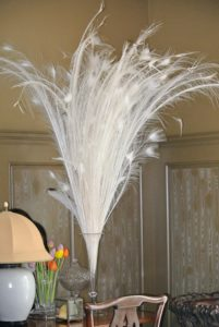 Here are long white tail feathers from my white Black Shoulder Silver Pied male peacock – so gorgeous gathered and placed in a tall vase.