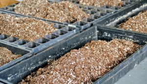 Because we seed so many plants, Ryan works in a production line manner in order to get as many trays started as possible.