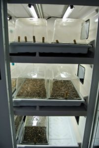 Urban Cultivator provides humidity domes for each tray. The humidity dome remains positioned over the seed tray until germination begins. Each tray receives about 18-hours of light a day. http://www.urbancultivator.net/
