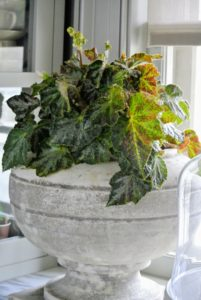 "In between my kitchen and ""canary"" room is my servery, a room from which meals are served - I often prepare and serve cocktails and other drinks from this space. Ryan decorated it with more beautiful begonias."