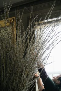 Ryan checks the tops of the branches to make sure they are not touching the shades or the mirror behind them.