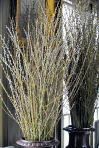 The pussy willows will keep their upright position. I love making large arrangements for use indoors - the bigger, the better!