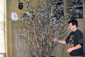 Here Ryan adds a few of the unusual Salix udensis 'Sekka', or Fantail Willow with a unique, flattened form, rich color, and small catkins. He also makes sure no branches are touching surfaces that could be scratched.