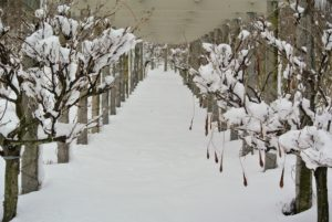 A snow covered path underneath my winding clematis pergola - the snow is messy, but also quite beautiful.