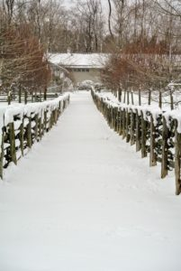 I love taking photos when snow covered paths are still untouched. This narrow path is between my paddocks leading up to my carport and my dwarf apple espalier.