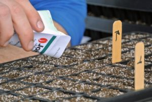 "Here, the seeds are easier to drop straight from the packet. Ryan plants these trays with pepper seeds, so on the back of the markers, he places an ""R"" or a ""Y"" to indicate the color of the pepper - red or yellow."
