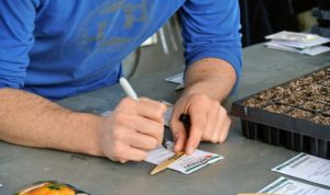 On each marker, Ryan writes the seed variety, so he's ready to place it in the trays after planting the seeds. It's also helpful to include the date of planting.