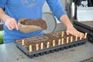 Once the entire tray has been filled, Ryan adds soil and covers the seeds.