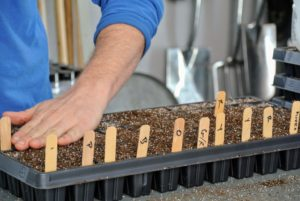And then he lightly pats the soil down, so the seeds have good contact with the soil.