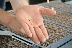 Some seeds are very small - be very careful when pouring them out of the packet.