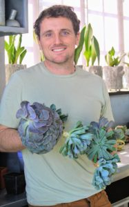 Ryan decides to use mostly echeveria. Echeveria is a large genus of flowering plants in the stonecrop family Crassulaceae, native to semi-desert areas of Central America, Mexico and northwestern South America. He is using echeveria in green and shades of purple.
