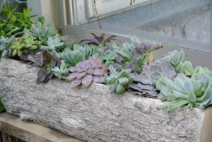 Succulents thrive in bright light and they should do well in this vestibule between my greenhouse and head house. What are your favorite succulents? Share your comments in the section below. I read every single one of them.