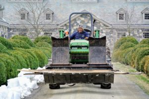 Pete takes all the burlap frames to storage where they will be kept until the fall, when we cover the boxwood again.