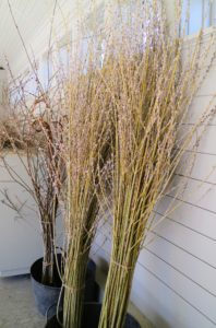 These pussy willows will look gorgeous in our office. How do you arrange pussy willows in your home? Share your comments with me below.