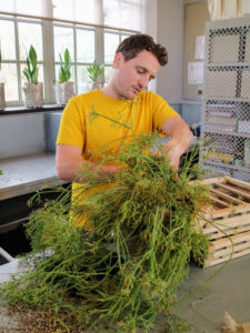 Ryan gently inserts the plant into the burlap pocket of the frame.