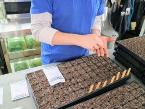 Here, Ryan drops the seeds into the cells by hand - about two for each cell. Germination is never guaranteed, so multiple seeds are always planted. This provides a better chance at least one will take root.