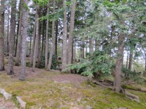 """Here is another view looking into the woodland. Straight ahead through the trees, you can see some of the """"Rockefeller Teeth""""."""