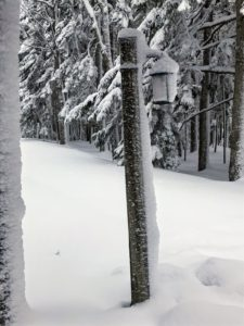 Snow accumulated on this lamppost. Looking at it, you can tell which direction the snow was driven.
