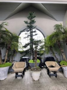 One of my favorite photos in this gallery is this one taken in the center of my stable, where we are keeping various tropicals for the winter. These palms usually sit outside the stable during summer.