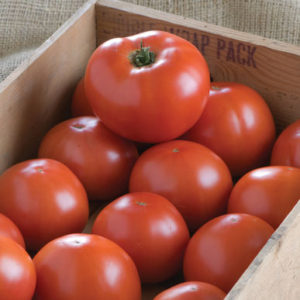 'BHN 1021' is a flavorful determinate variety. (Photo from Johnny's Selected Seeds)