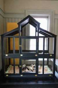 This is one of two black canary cages that I store in the Carriage House. They will eventually be moved into a new enclosed porch I'm building up at my Winter House. We decided to line it with a bedding of soft straw and place some of our two-week old chicks inside for the children to see.