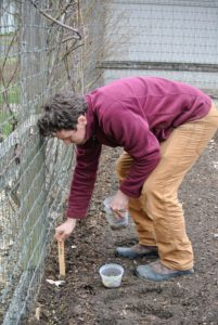 Ryan places another big marker into the soil to indicate the snow pea section.