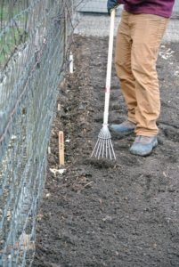 Once all the seeds are in the ground, Ryan covers them with an inch-and-a-half of soil. Ryan uses this narrow rake to also tamp the seeds gently, so there is good contact between the soil and the seeds.