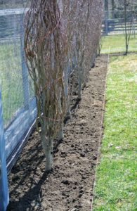 These trees are planted so perfectly - all of them are well aligned and spaced just right.