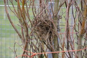 One tree had a bird's nest resting within the branches.