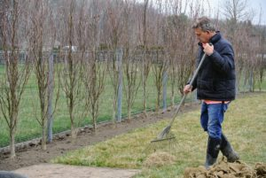 Fernando rakes the lawn to remove any soil or dead grass.