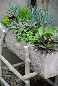 If you recall, I planted many succulents in my new Martha Stewart faux bois planter boxes available at QVC. I designed the planters with realistic bark texture. Each has three drainage holes in the base to release excess water and measures approximately 30-inches long by 15-inches wide. It also comes with its own stand. Be sure to take a look at it on the QVC web site. goo.gl/QZe4zc