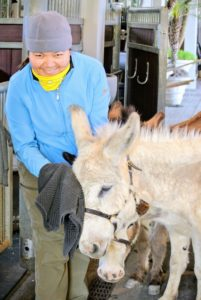 Here's Dolma cleaning Clive's face. The donkeys love all the attention - they are very social animals.