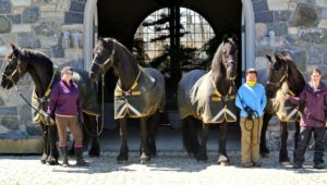 And here are my other handsome Friesians - Rinze, Meindert, Rutger and Ramon being led by Helen, Dolma and Sarah. See you tomorrow my dear horses.