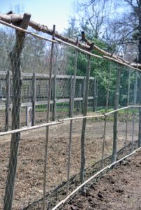 This year, we planted the sweet peas along this trellis located on one side of my vegetable garden. This trellis is similar to all the others made here at the farm - with materials we already have on hand.