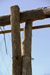 Two diagonal branches measuring about 10-feet tall, with two-feet underground, were used to create the necessary slant of the trellis and then secured with wire.