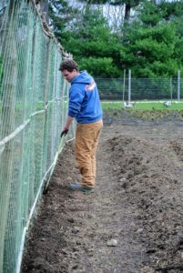 Using the hoe, Ryan dug a shallow trench – just a couple inches deep. Sweet peas are happiest in the sun with their roots in cool, moist soil.