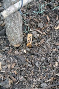 Ryan places a wooden marker to identify what seeds were planted in what location.