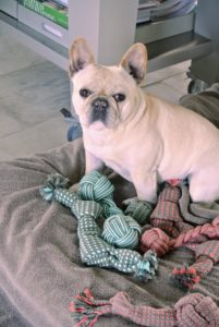 Here is Creme Brulee sitting with some of her new Martha Stewart Pets toys on Amazon.com. These assorted rope toys include a rope dumbbell, and a squeaker and crinkle toy.