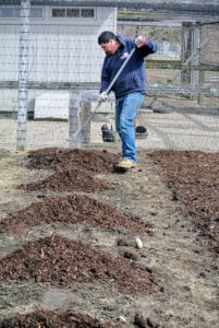 Using a garden rake, Wilmer begins spreading the compost over the soil.