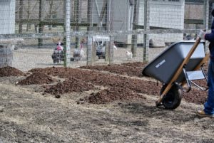 The composted manure is placed in clumps and then a two to three inch layer is spread evenly throughout the beds. Compost helps make the soil more absorbent and is a great way to add nutrients back into the earth. It is also a good way to ensure big, bountiful crops come summer.
