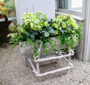 I will also be selling more of my faux bois planter boxes. Here is one in my greenhouse that is planted with hellebores and creeping fig.