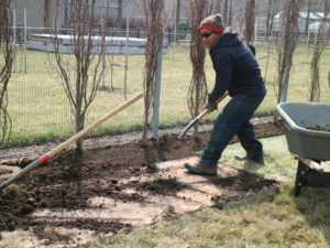 Because of the plywood, it is easy to shovel all the compost back into the trench without too much mess on the new lawn.