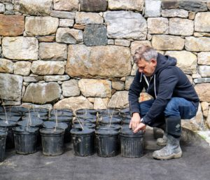 Fernando follows behind to check that every weed disk is fitted properly on each pot.