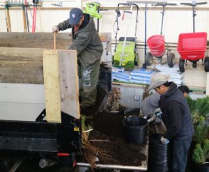 """In order to get all the seedlings potted as quickly as possible, it was """"all hands on deck."""" The crew created a very productive assembly line."""