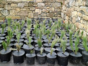 Here is another load of cuttings already unloaded and lined up in their new home.