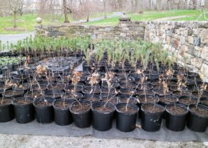 These trees and shrubs will be a spectacular addition to the gardens and woodlands at my farm, and to our environment.