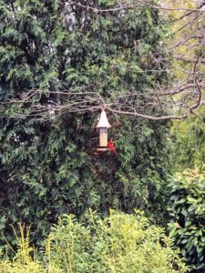 Here is a bird feeder on one of the branches in QVC's outdoor set. Several birds, including this cardinal, came by for a snack.